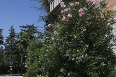 private villa with pool for rent in Desenzano del Garda in Lombardy
